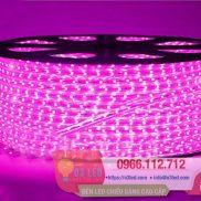 Đèn LED Dây 5050 100m màu tím